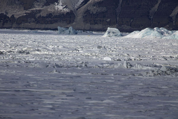 Picture of Polar bear waiting for a seal to appear under the iceMohnbukta - Svalbard and Jan Mayen
