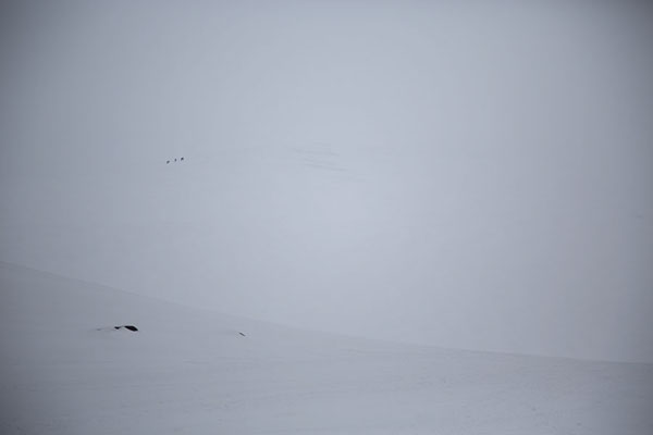 In a white world, a few dark spots mark climbers on the ridge leading up to Trollsteinen | Randonn�e � Sarkofagen et la grotte glac�e |