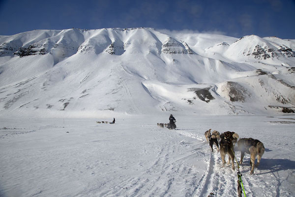 Huskies pulling a sledge through the snowy landscape of Spitsbergen | Dog sledding | Svalbard and Jan Mayen