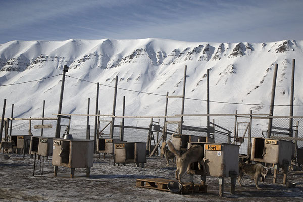 Kennels with huskies and snowy mountains in the background | Dog sledding | Svalbard and Jan Mayen