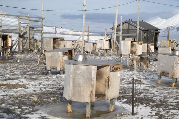 Picture of Kennels with huskiesSpitsbergen - Svalbard and Jan Mayen