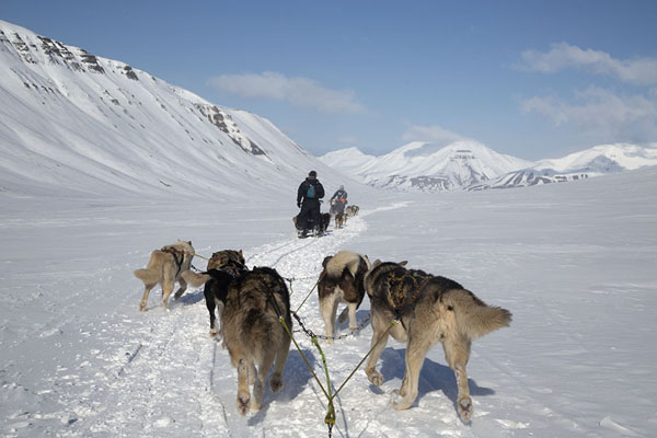Picture of Huskies pulling a sledge in the snowy winter landscape east of Longyearbyen