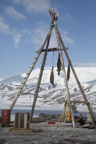 Foto van Seals hanging to dry to serve as dog foodSpitsbergen -