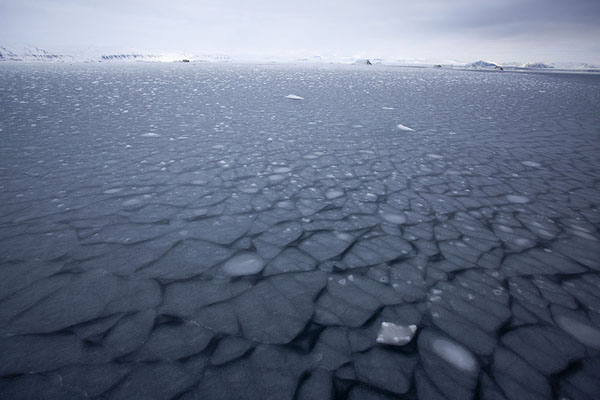 Foto de Uniquely shaped pieces of ice frozen into StorfjordenStorfjorden -