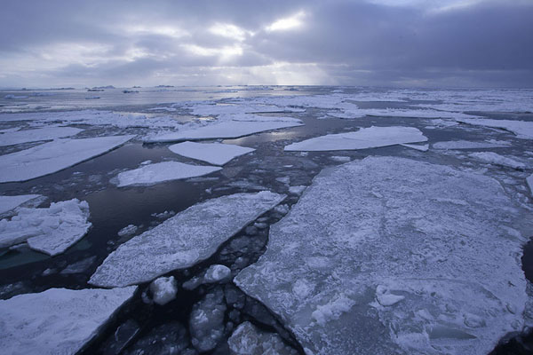 Plates of ice floating in Storfjorden - 司法勒巴和燕麦言