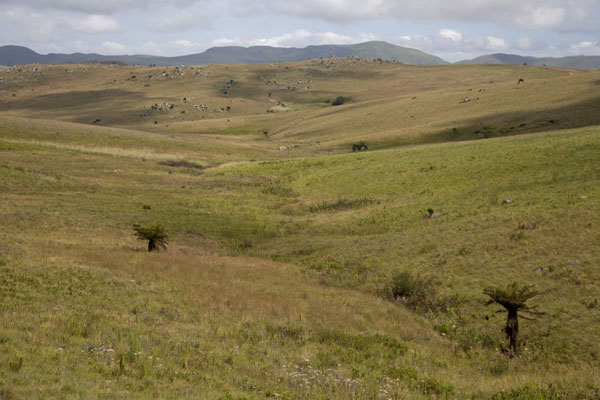 Picture of Landscape with a few ferns and mountains in the distance in Malolotja National ParkMalolotja - Swaziland