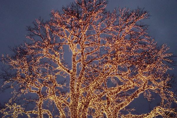 Isn't this tree wonderful? | Christmas Lights Gothenburg | Sweden