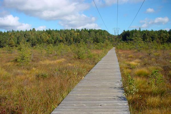 Safely walking through the marshland on wooden planks | Delsjön | Sweden