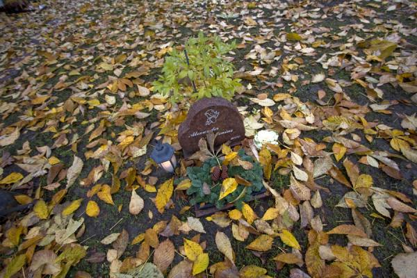 Foto di Svezia (Grave surrounded by autumn leaves near Katarina Kyrkan)