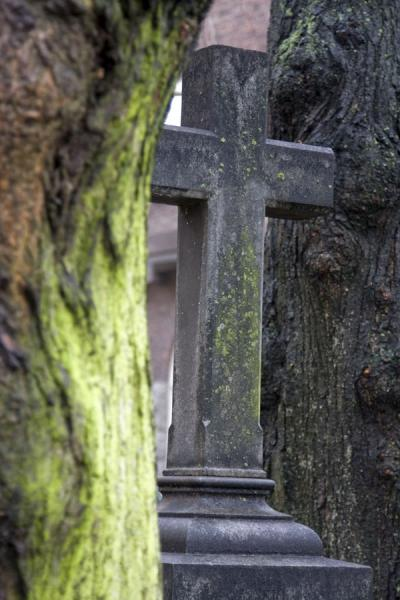Cross between two old trees at the cemetery near Katarina Kyrkan | Katarina Kyrkan | Sweden