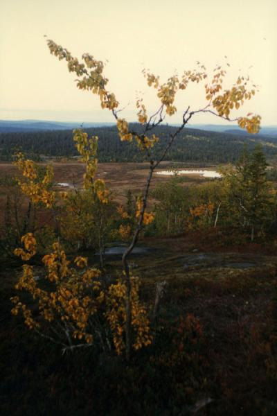 Picture of Landscape of northern SwedenLappland - Sweden
