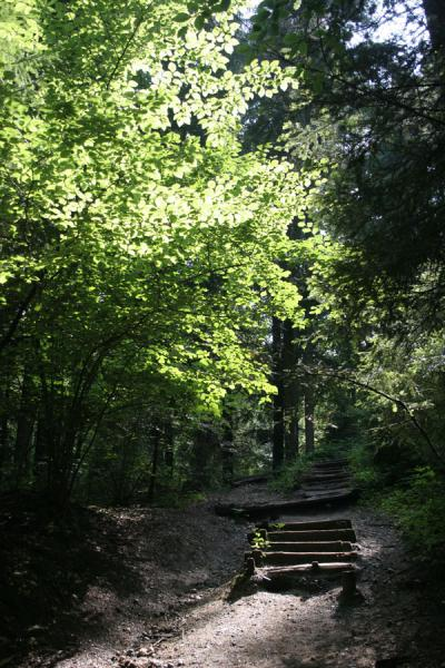 Picture of Fräkmüntegg (Switzerland): Trees along the path leading up to Fräkmüntegg