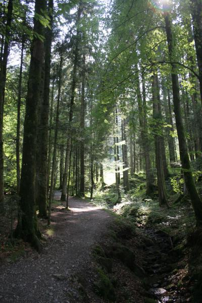 Picture of Fräkmüntegg (Switzerland): Path leading up through the woods towards Fräkmüntegg