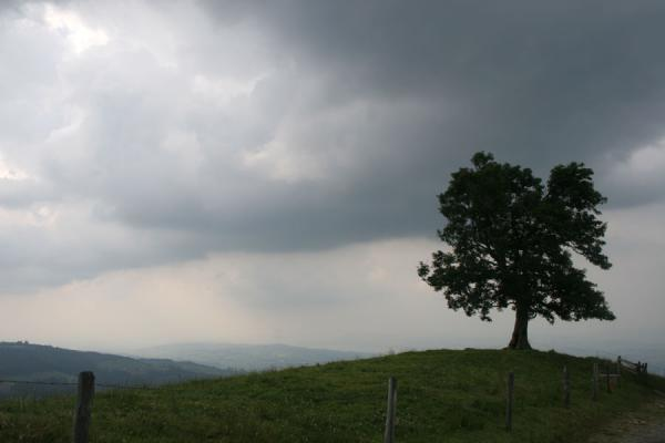 The sky turns grey on my way down: lonely tree | Fräkmüntegg | Switzerland