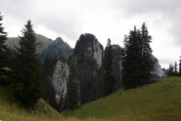Picture of Trees and vertical cliffs on the southern side of Stockhorn