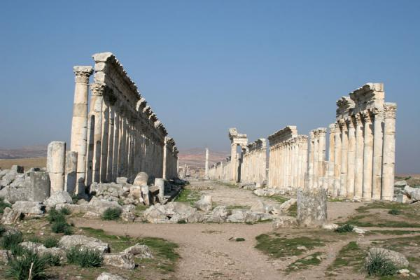 Picture of Apamea (Syria): Cardo or main street of Apamea, seen from south to north