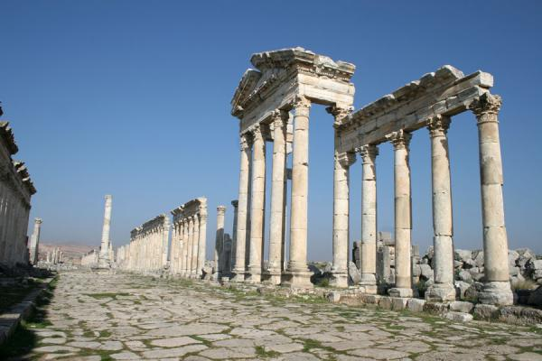 Picture of Apamea (Syria): Apamea: portico and votive column on the cardo of this ancient city