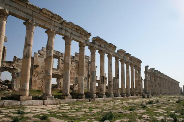 Picture of Apamea (Syria): Apamea: line of columns on the cardo
