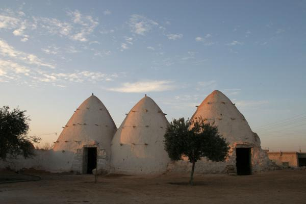 Picture of Beehive houses (Syria): White-painted beehive houses in Sarouj