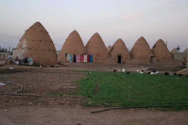 Picture of Beehive houses (Syria): Beehive houses and animals grazing in Sarouj