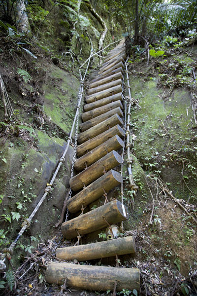 Picture of Sandiaoling Waterfall Trail (Taiwan): Wooden ladder bringing the hiker up a cliff on the waterfall trail