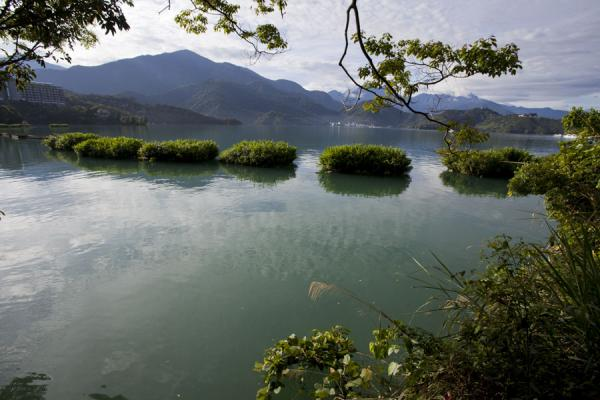 Early morning on Sun Moon Lake with floating gardens where plants are cultivated | Sun Moon Lake | Taiwán
