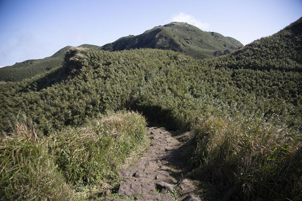 Looking up at Mount Qixing from the north side trail | Yangmingshan National Park | 台湾