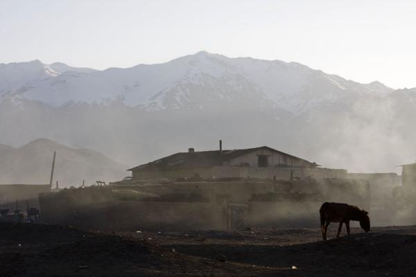 Picture of Donkey in the early morning at BulunkulBulunkul - Tajikistan