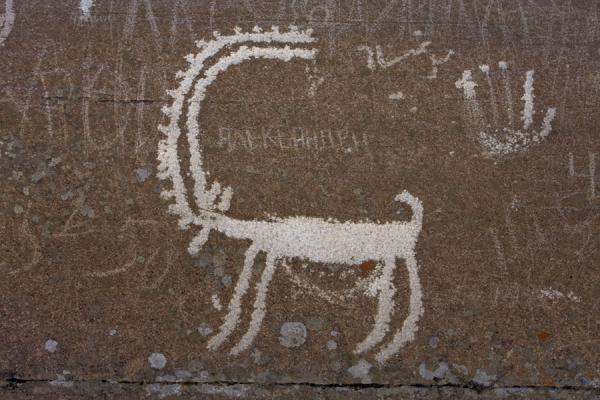 Picture of Long-horned animal depicted on a petroglyph