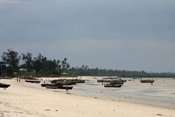 Photo de Bagamoyo is a natural port: boats docked on the beach - Tanzanie - Afrique