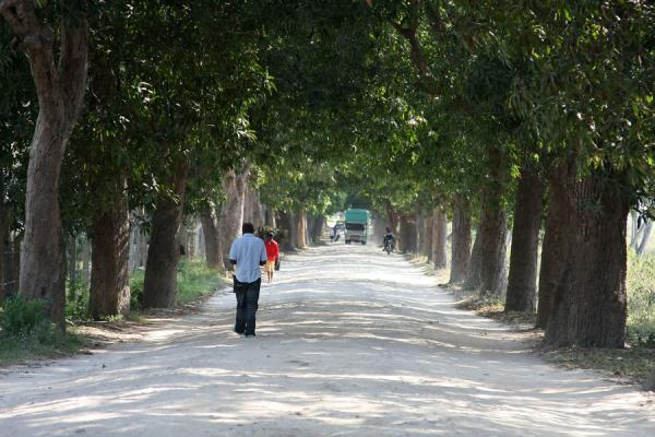 Tree-lined road in Bagamoyo - 坦尚尼亚