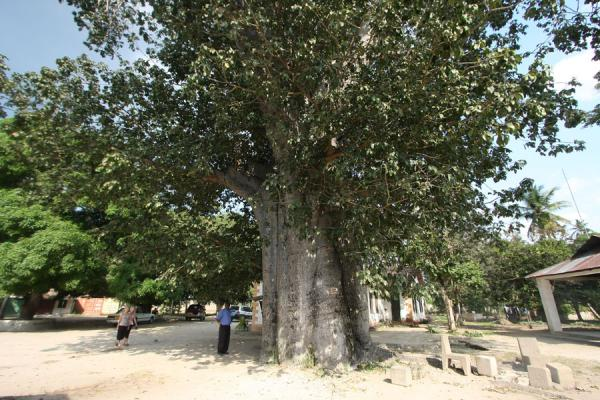Foto van Baobab tree with a history near the Catholic mission - Tanzania - Afrika