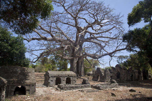 Graveyard under the baobab tree of Kunduchi | Ruines de Kunduchi | Tanzanie