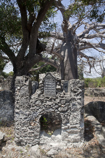 Tomb at Kunduchi with baobab tree in the background | Kunduchi ruïnes | Tanzania
