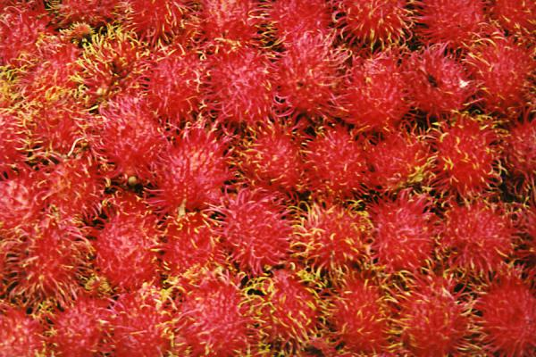 Close-up of rambutan fruit | Fietsen in Bangkok | Thailand
