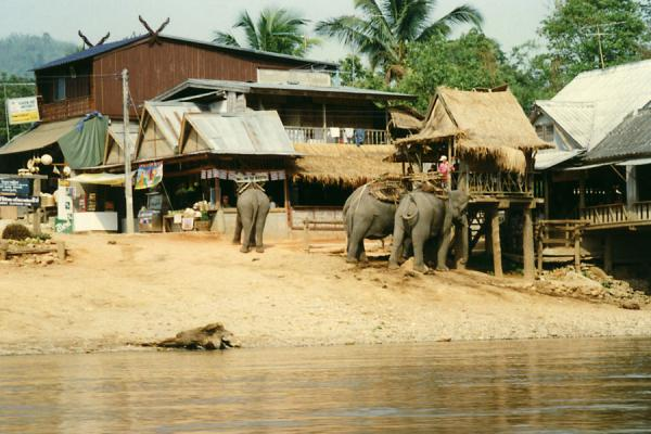 Picture of Chiang Rai river tour (Thailand): Elephants in a village on Mae Kok river