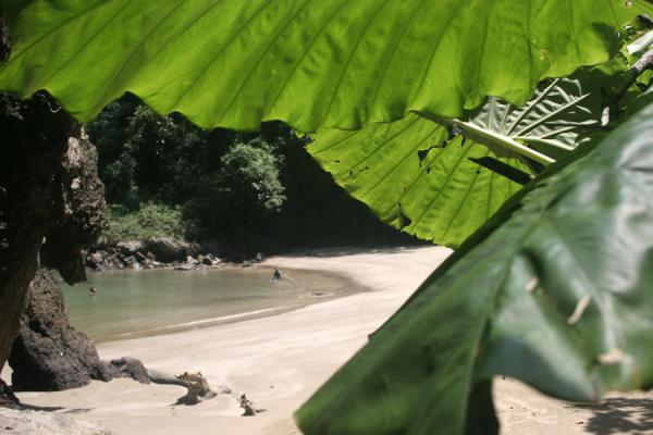 Picture of Emerald Cave (Thailand): Emerald Cave beach hidden behind the leaves