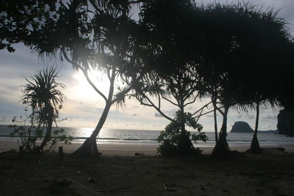 Picture of Ko Mook: silhouet of trees on the beach