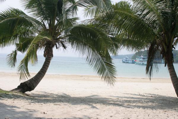 Two palmtrees guarding the entrance of Ao Cho | Ko Samet | Thailand