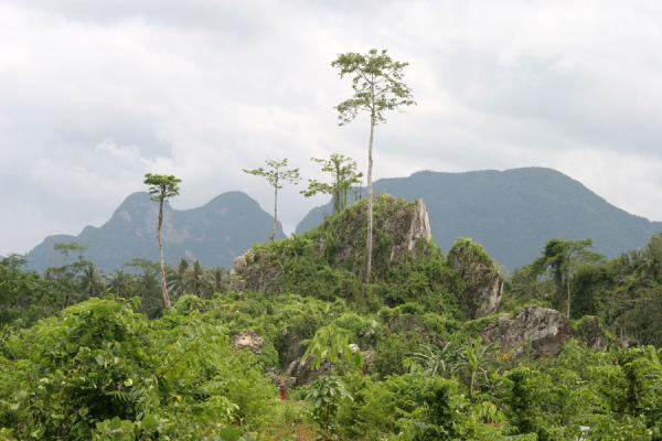 Picture of Raman Forest (Thailand): Lush vegetation on the way to Raman Forest