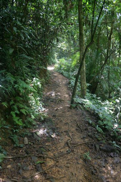Picture of Raman Forest (Thailand): Tropical trees along the path leading to the waterfall of Raman Foresat