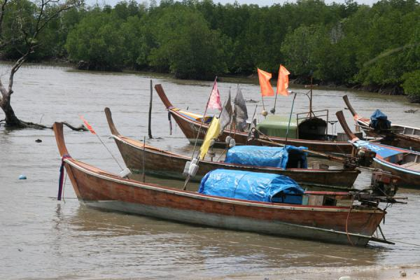 Picture of Thai Fishermen (Thailand): Fisherboats with brightly coloured flags moored at Ko Mook