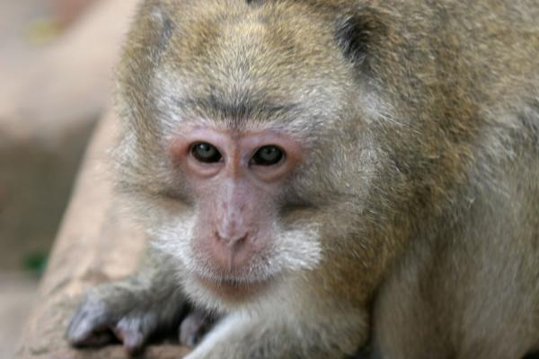 Looking right at me: monkey outside Wat Tham Suwannakuha | Wat Tham Suwannakuha | Thailande
