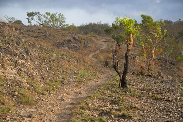 Photo de Trail leading from Beloi to AdaraAtauro - Timor Oriental