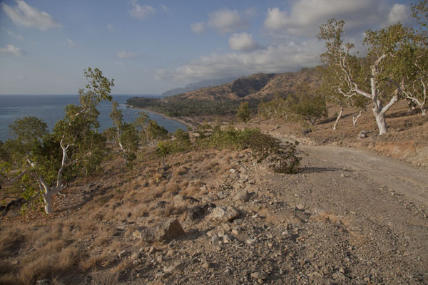 Photo de The dirt track in the north of AtauroAtauro - Timor Oriental