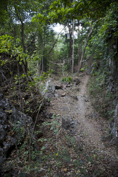 Photo de Trail leading to the west of the islandAtauro - Timor Oriental