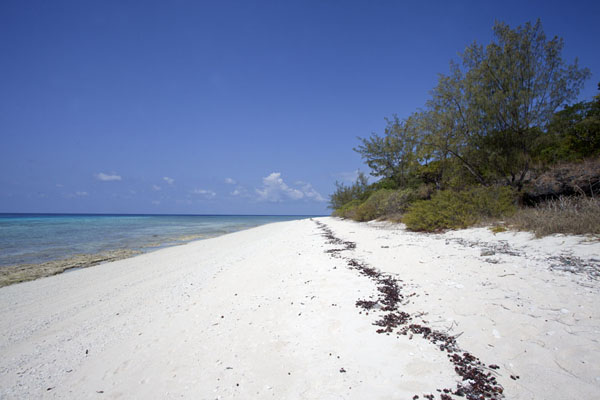Picture of Jaco island (Timor-Leste): The deserted white beach of Jaco island