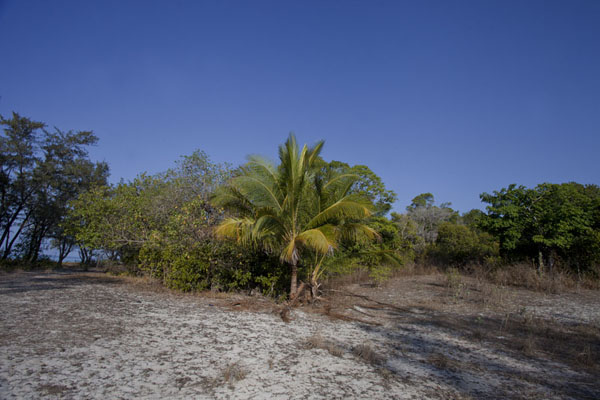 Picture of Jaco island (Timor-Leste): Palm tree in the typical landscape of Jaco island