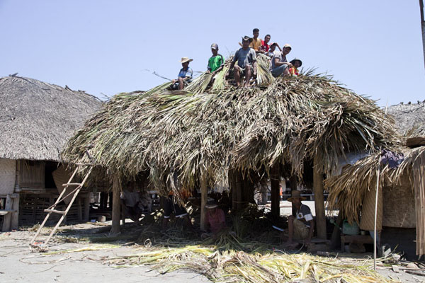 Men covering a house with dried palm leaves | Suai Loro | Timor-Leste
