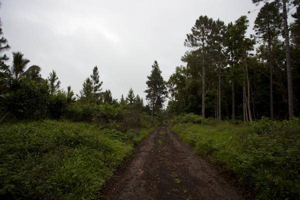 Foto de Dirt track through the forest on 'Eua island - Tonga